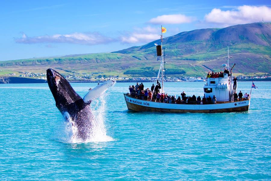 Walvissafari vanuit Reykjavík